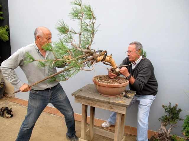 bonsai hayku 3IMG_1126