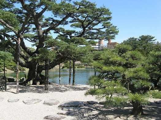 pinus thunbergii en Japón