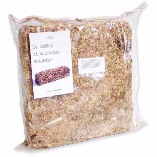 Esfagno Chileno Premium en Fibra 500 gr., Sustrato Natural de Esfagno Musgo para Orquídeas y Bonsai, Sphagnum Moss