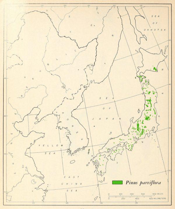 Zonas donde habita el pinus parviflora