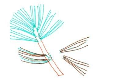 corte de pinulas con tijera